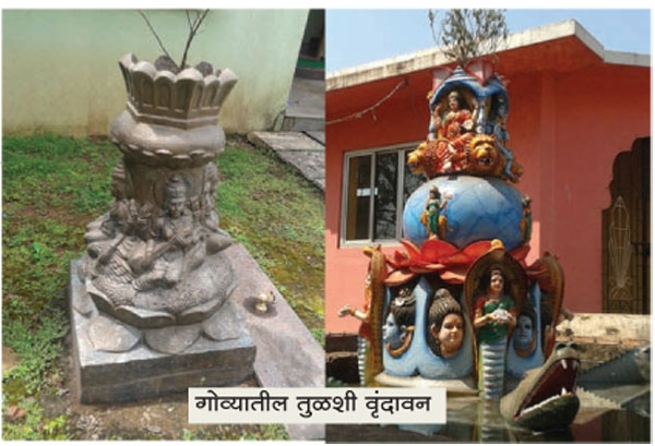 Tulashi Vrindavans & Holy